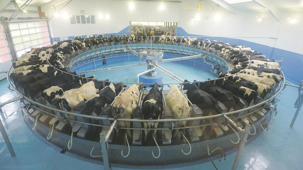 The 60-point rotary parlour on-farm sees cows visit three times a day and includes features such as a height adjustable platform for staff