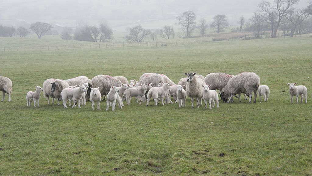Sheep ticks make early appearance due to weather