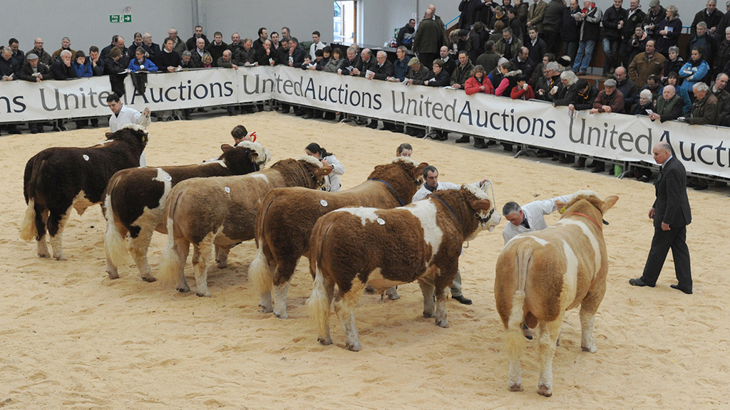 Stirling bull sales postponed