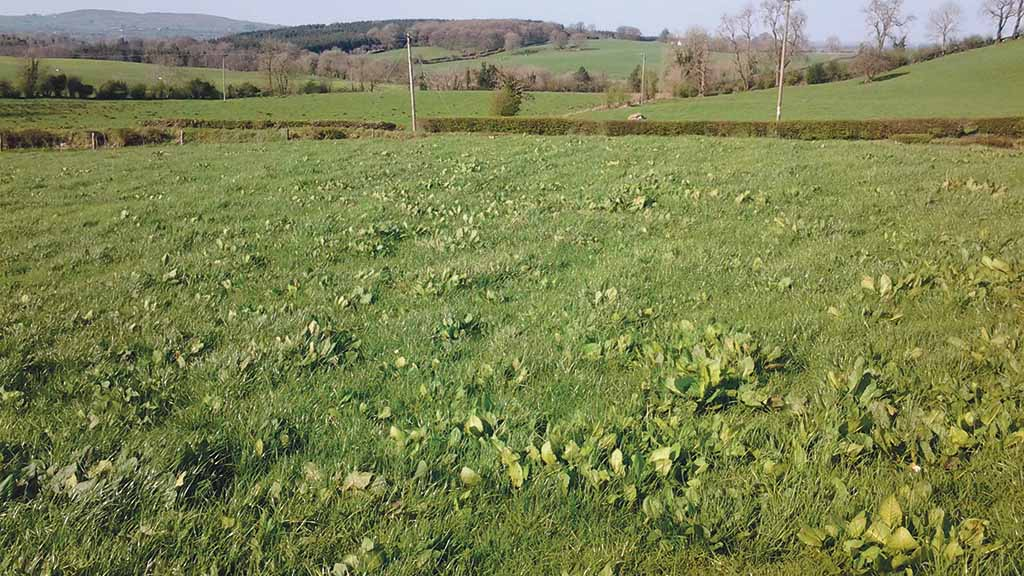 Dow Grassland: Weed control is crucial to making most from grass