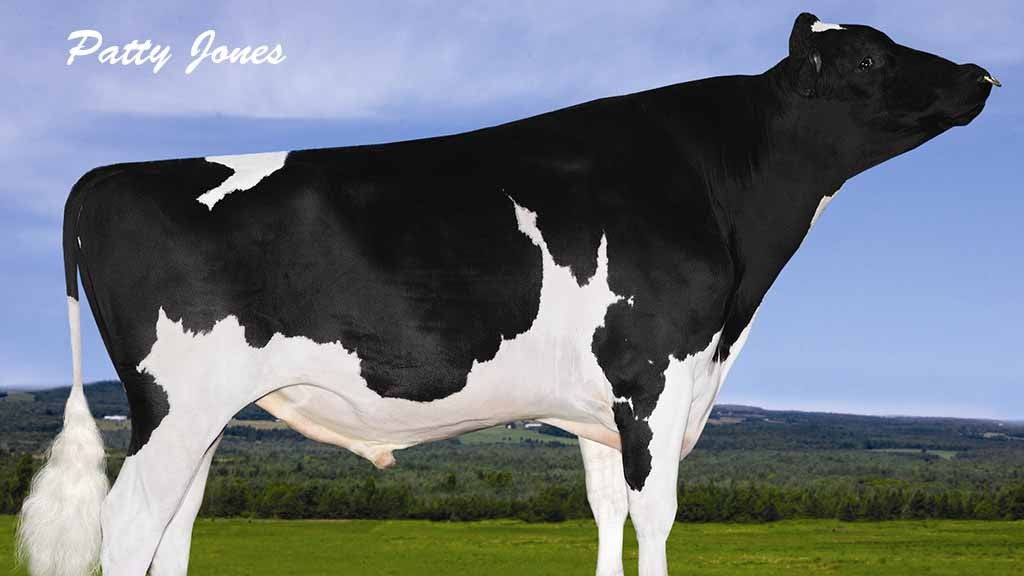 more top genomic holsteins gain daughter proven indexes insights fg insight. Black Bedroom Furniture Sets. Home Design Ideas