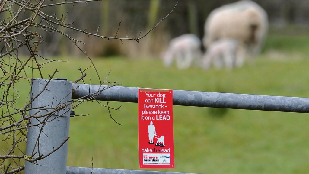 New guidelines released to encourage dog walkers to take the lead