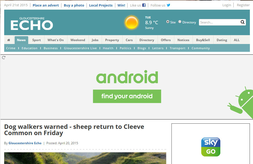 Dog walkers warned - sheep return to Cleeve Common on Friday