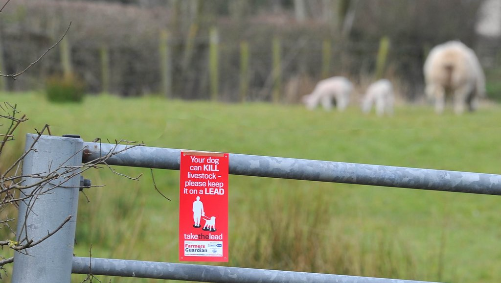 Government 'reflecting' on best way to crackdown on livestock worrying