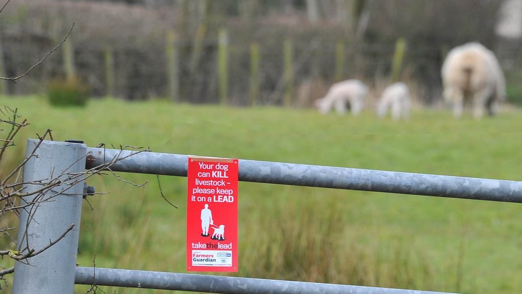 Livestock worrying in Scotland hits 7-year high
