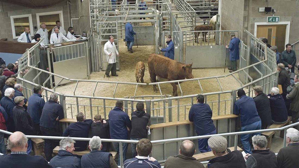 Family livestock business acquires Caledonian Marts