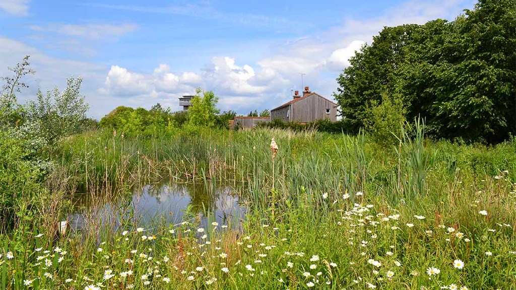 Spared land could be reclaimed for woodlands and wetlands. (Credit Catherine McIlwraith)