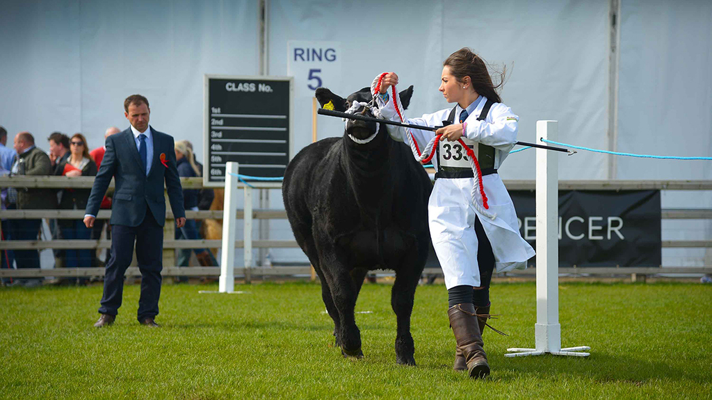 Balmoral Show 2015: Beef Shorthorn clinches inter-breed