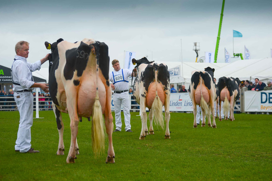 Balmoral Show 2015: Fleming Family reign supreme in dairy section