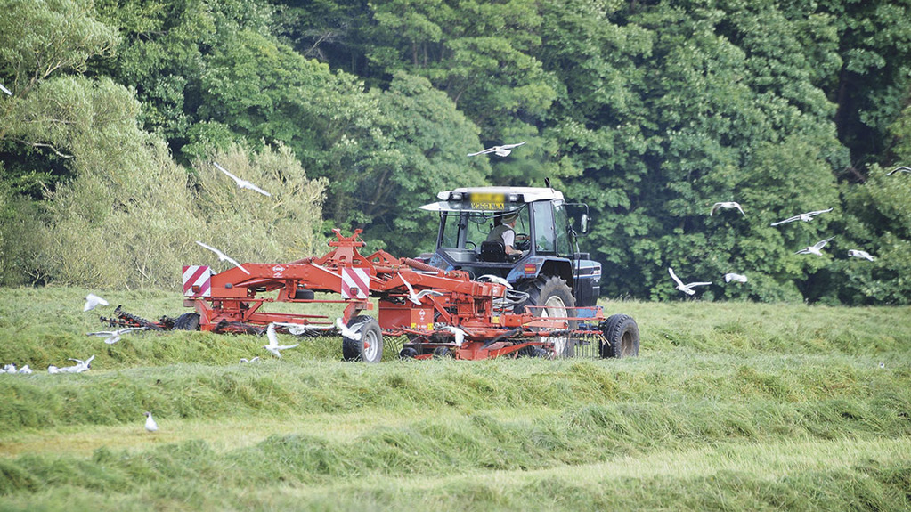 Protein levels in silage lower than target