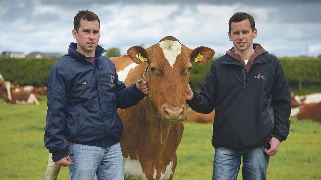 Royal Highand Show Preview: Passion for breeding and grazing driving force behind Troutbeck Ayrshires