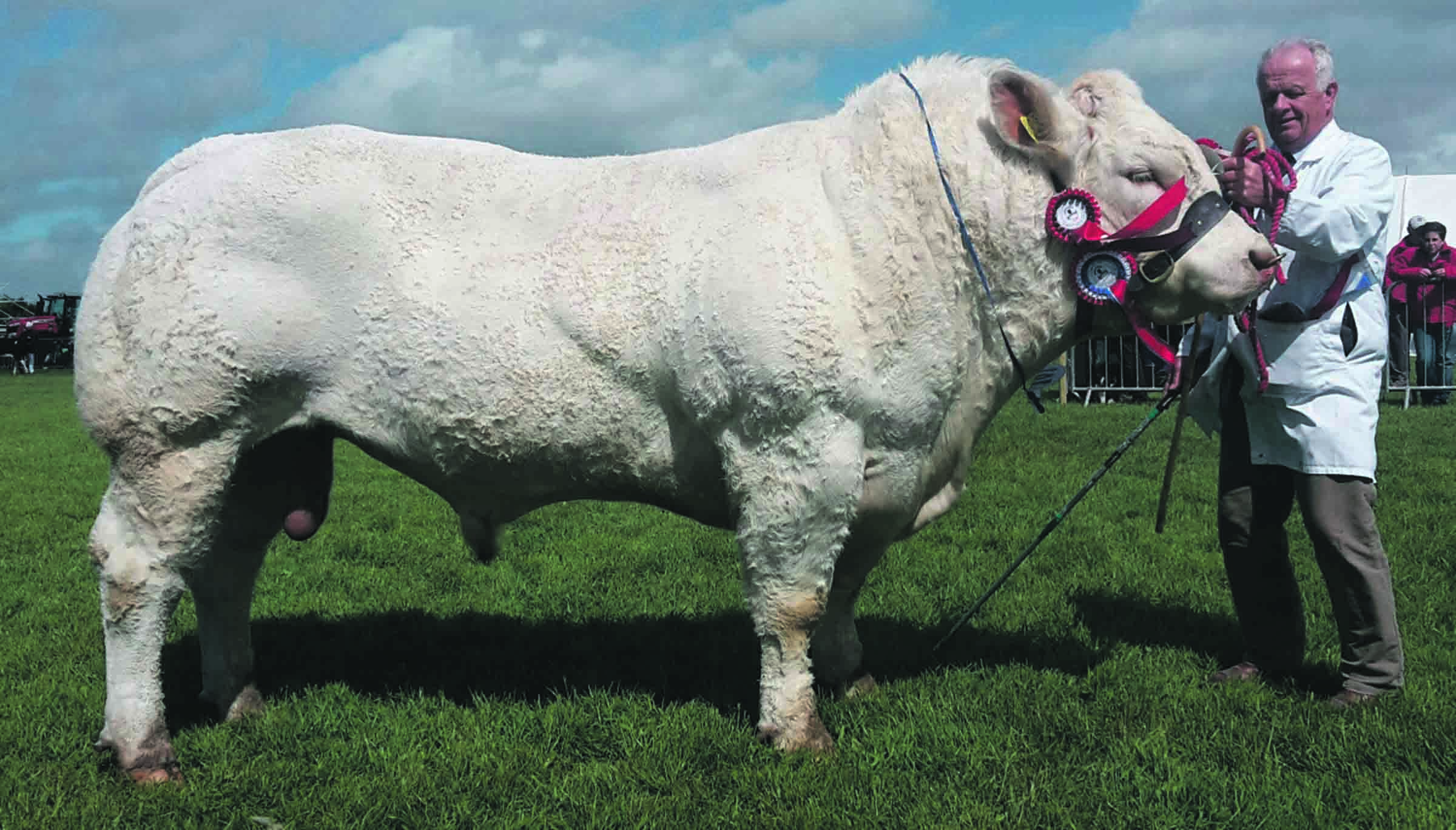P.W. and V. Vasey's Sandleford Harrison won the inter-breed champion and champion of champions
