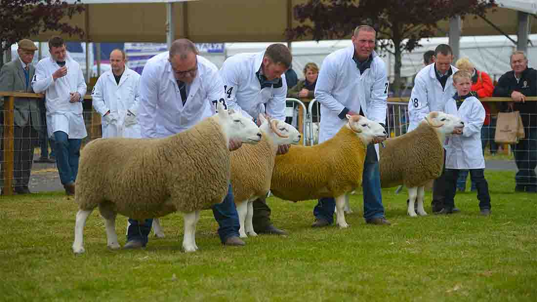 About 7000 of the UK's finest livestock was on show at the Royal Highland Show