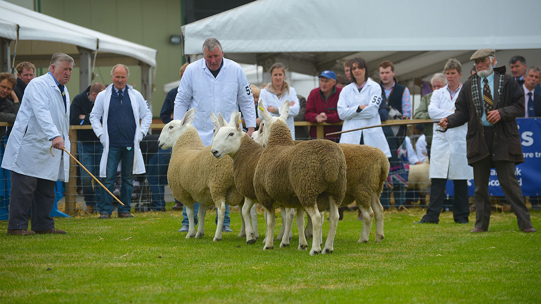 Videos from the Royal Highland show