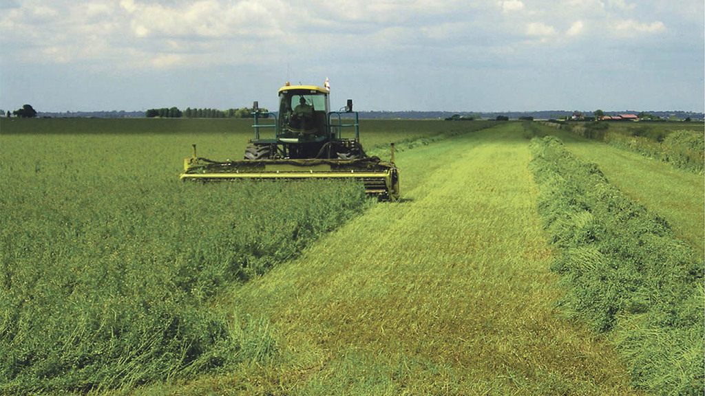 Could protein-packed lucerne be a forage option on your farm?