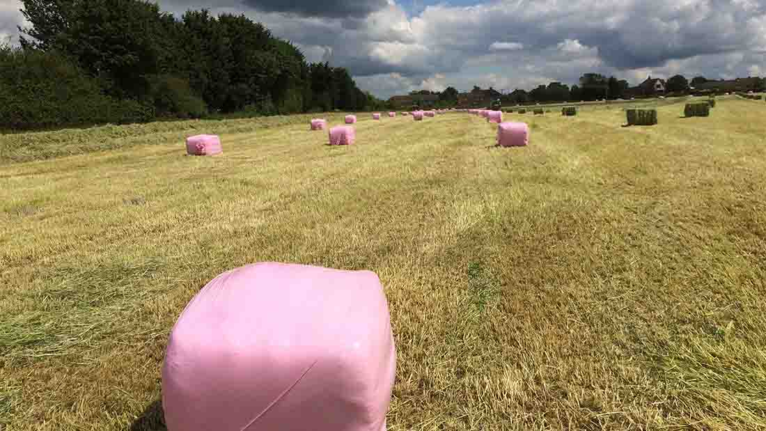 Pink bales coloured the fields at David Simkin's farm, Bedfordshire, last summer