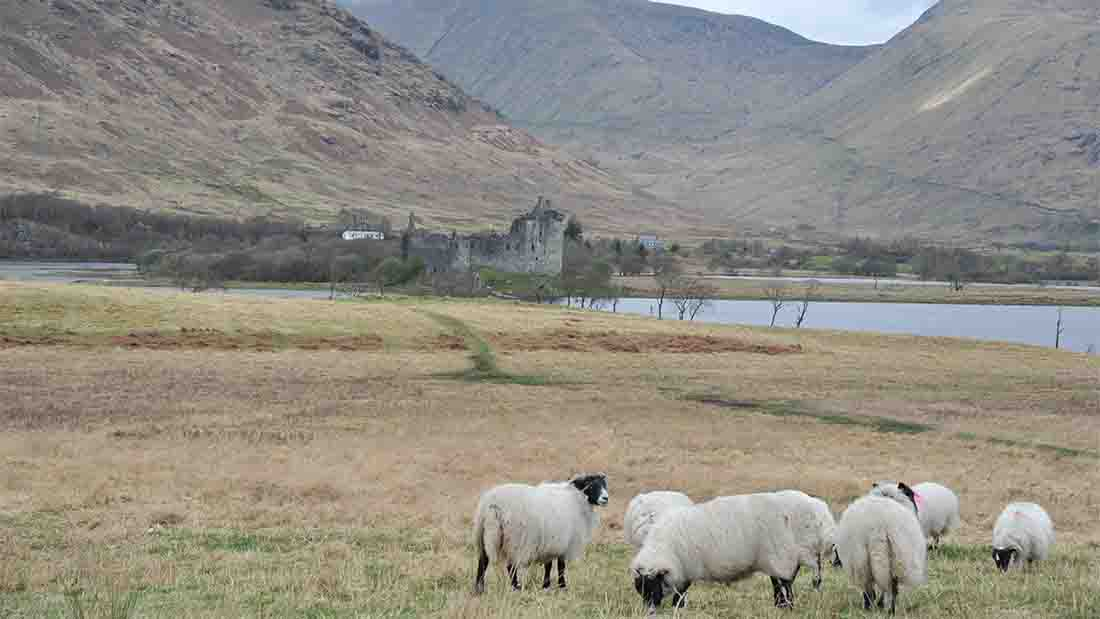 Scottish farms made available for young farmers to get started