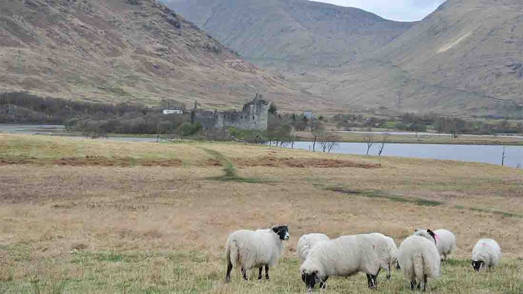Land Reform Bill must take into account practicalities of farming