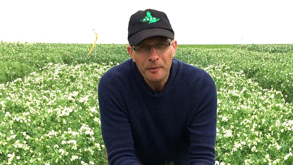 New Lincolnshire trials site a boost for vining pea growers
