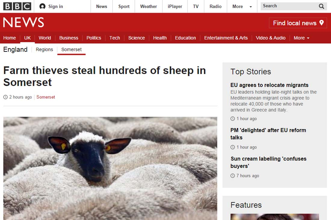 Farm thieves steal hundreds of sheep in Somerset