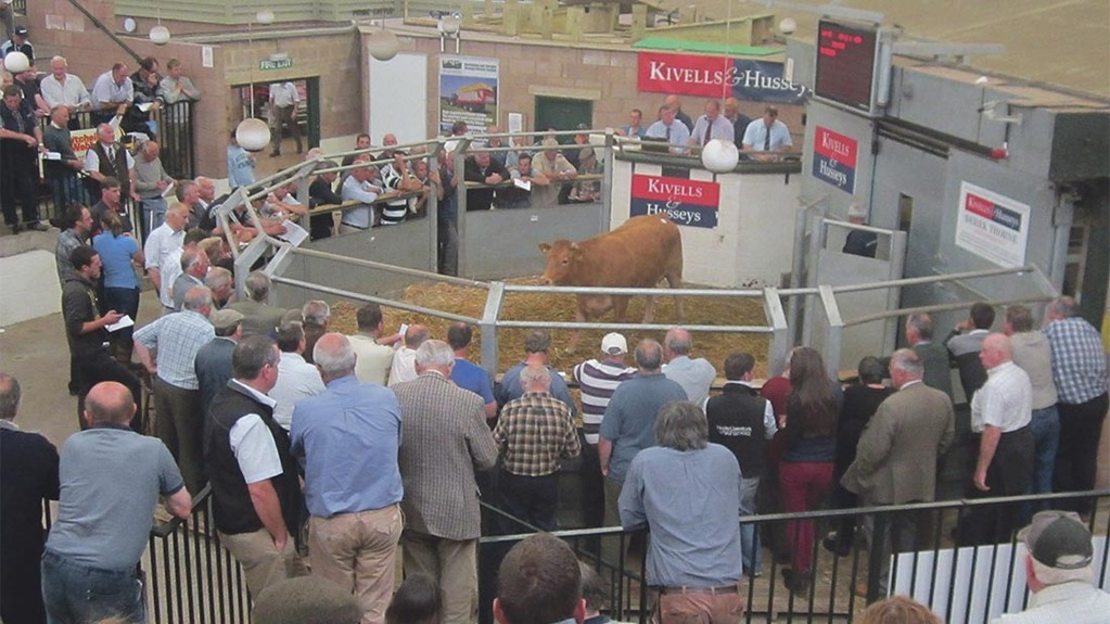 Cattle numbers were significantly down at a recent orange market in Exeter