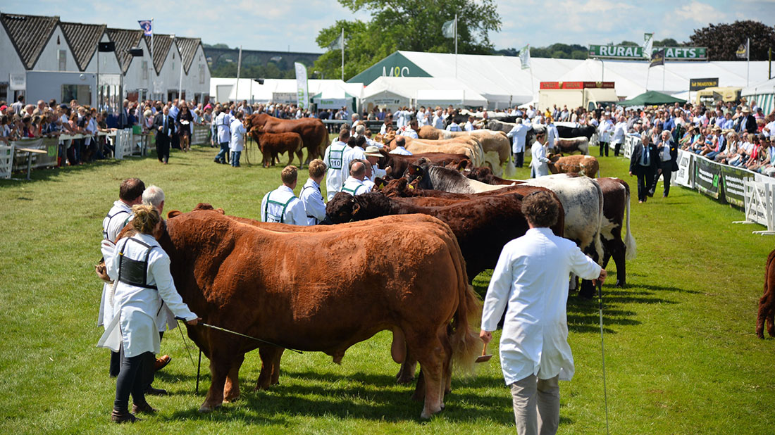 This year's Great Yorkshire Show is set to be an exhibition of the country's best livestock.