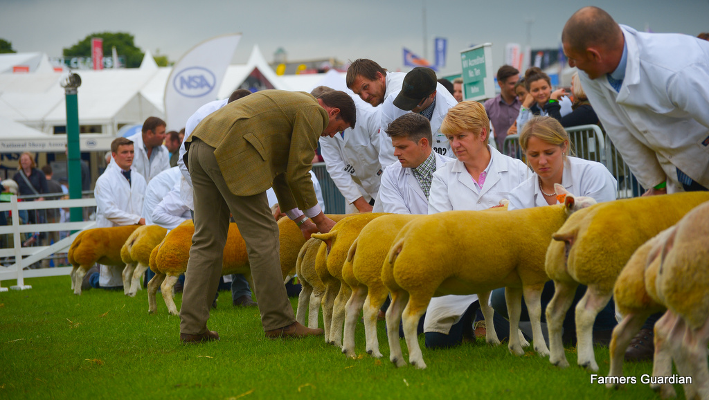 Great Yorkshire Show: Charollais triumphs in sheep inter-breed