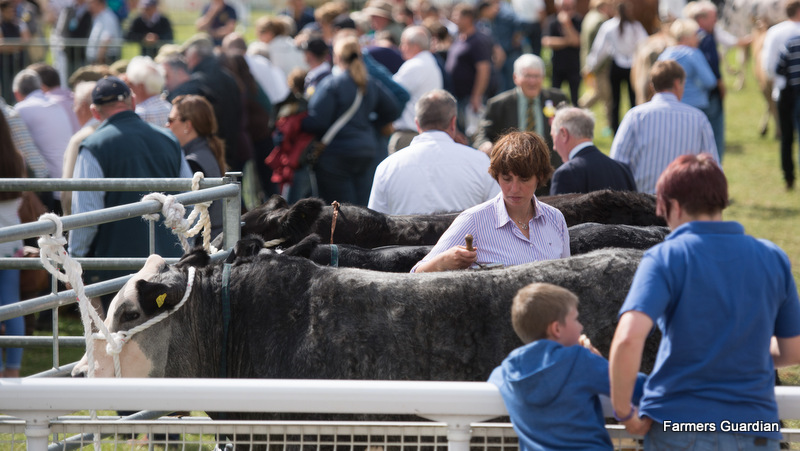 Royal Welsh Show: Baby beef champion takes commercial supreme