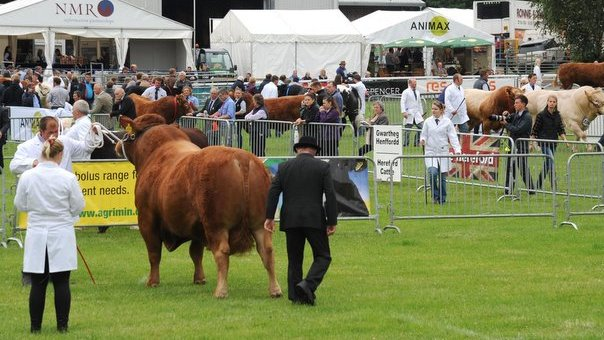 Limousin heifer lifts Royal Welsh inter-breed title