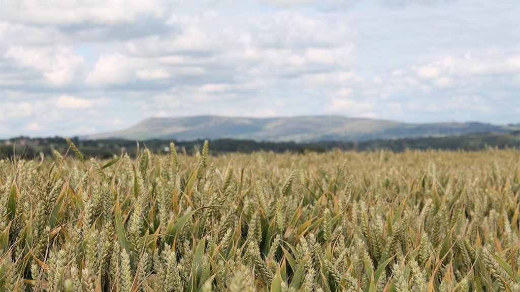 Arable farms hit hardest by rising input prices