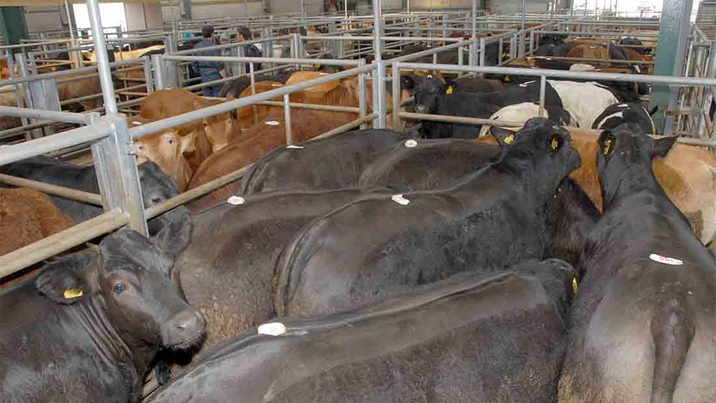 Cattle dealer fined £8,500 for flouting movement rules