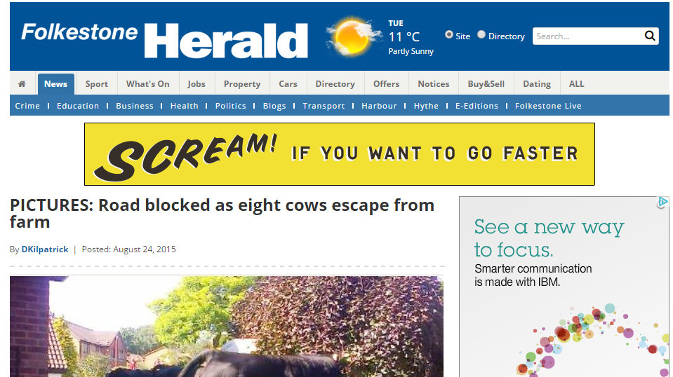 Road blocked as eight cows escape from farm