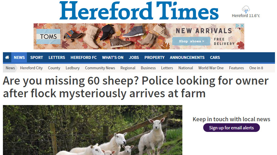 Police looking for owner after flock mysteriously arrives at farm