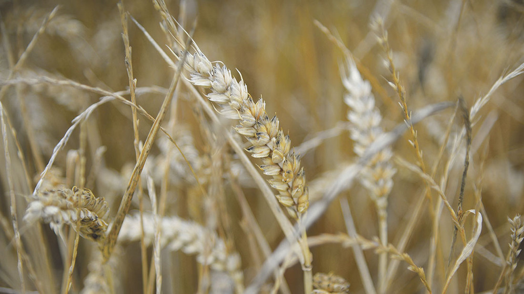 About 57ha (140 acres) of winter wheat is part of the arable enterprise