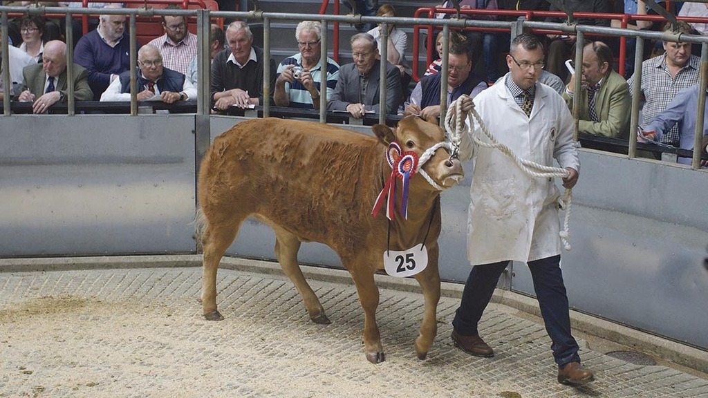 Christmas Classic show at Thainstone Centre sees heifer go for £3,600