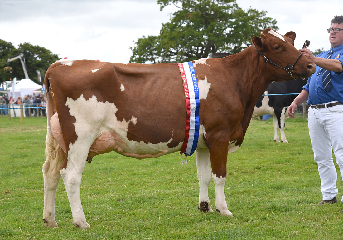 Inter-breed and Ayrshire champion, Acton Brazen, from Iwan Huws, Bodedern, Holyhead