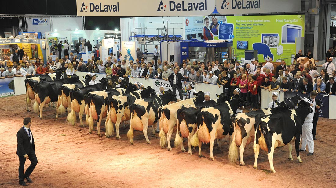 Livestock round-up: All things dairy