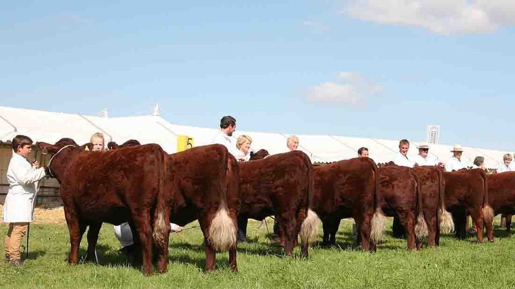 Major agricultural shows to be hit by new TB post-movement testing rules