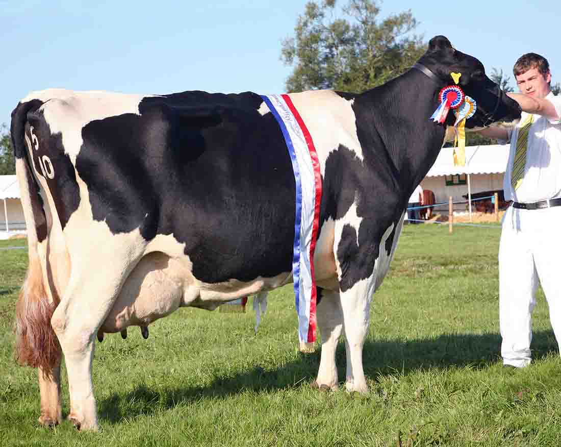 Inter-breed dairy champion, Lymatra Roxell Ann
