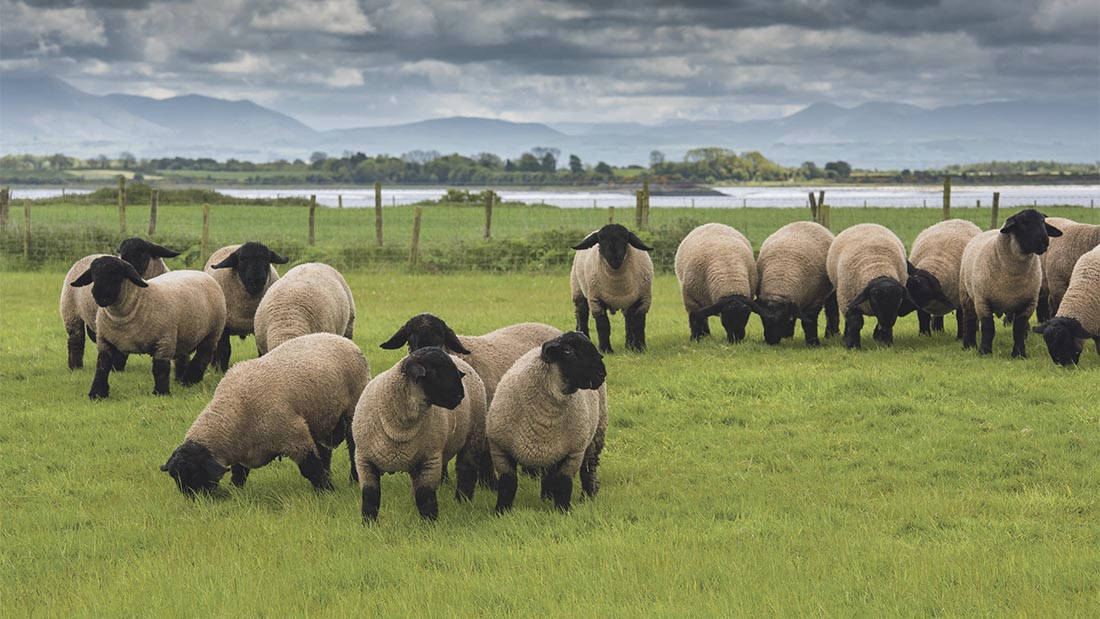 UK NFUs discussed a processor code for the sheep sector in Brussels last week