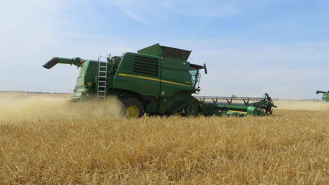 Consumption push essential for UK cereals industry