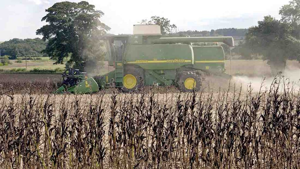 Top tips for harvesting field beans