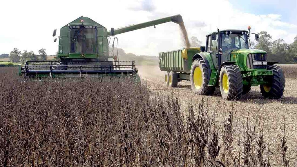 UK human consumption grade bean availability about 'half of last year'