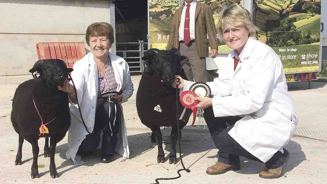 Glenda Hughes (right) with her champion male Black Welsh Mountain, selling for 1,100gns