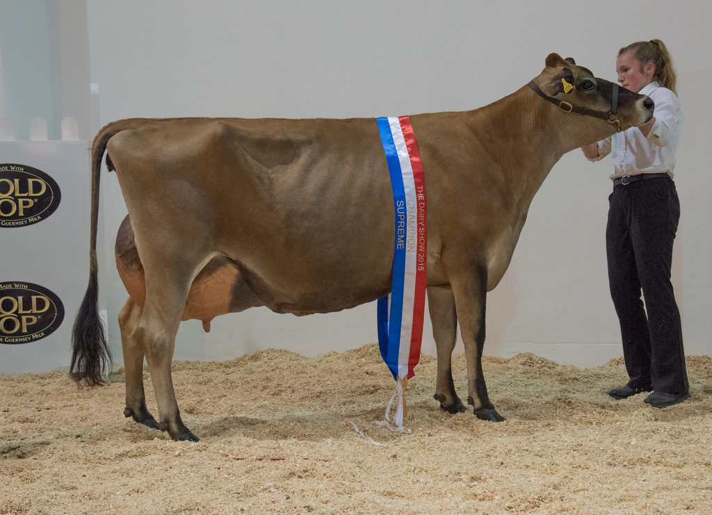 Jersey is pick of the panel at Dairy Show for second year running