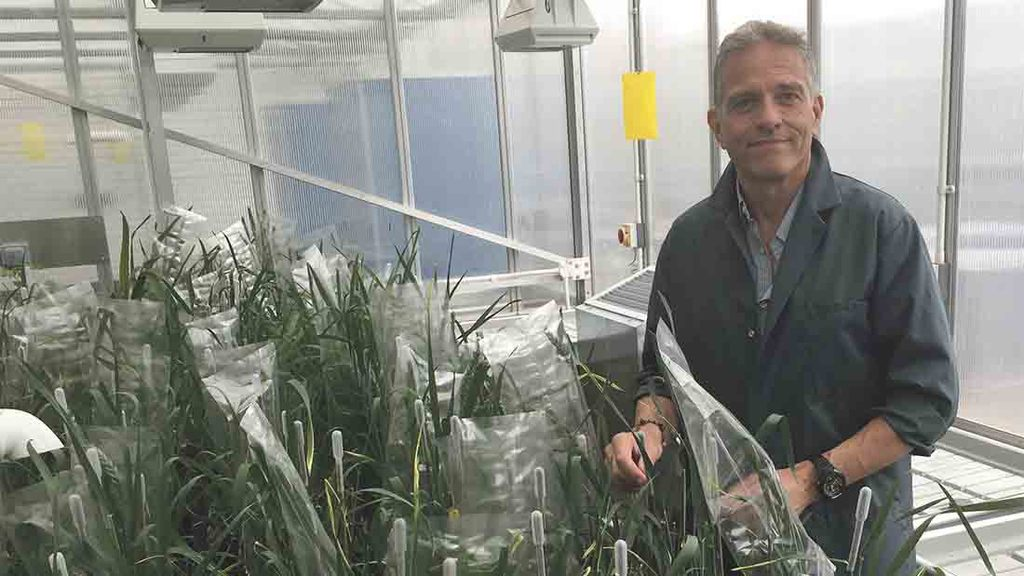 Revolutionise plant breeding
