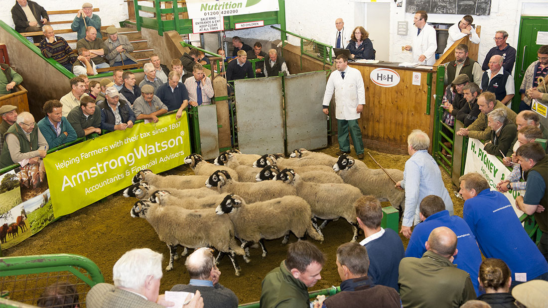 Kirkby Stephen Swaledale females sell to £1,200/head