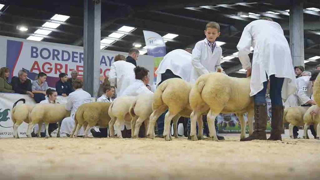 Borderway Agri-Expo all set for beef and sheep bonanza