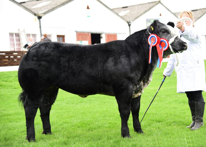Supreme Champion Minion owned by Sally Lloyd