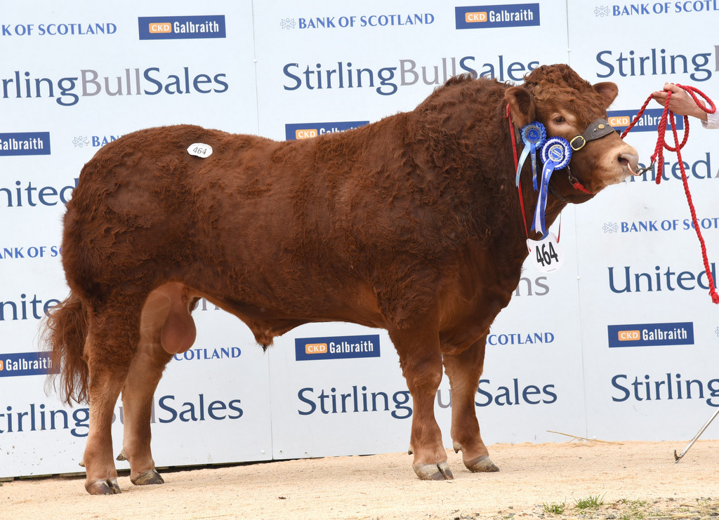 Stirling 2015: Goldies top Stirling Limousin trade at 13,500gns